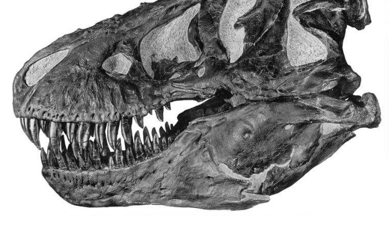 How Many Teeth Did A Tyrannosaurus Have?