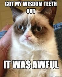 wisdom teeth meme grumpy cat